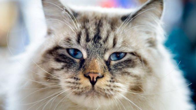 Möpse und Katzen